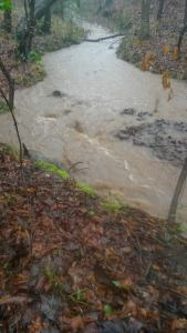 Ferlin Blood The creek on my land during recent rains.