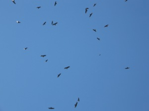 Circling buzzards