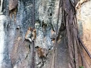 Tiger Cave monkeys