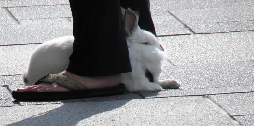 Memorial Rabbit