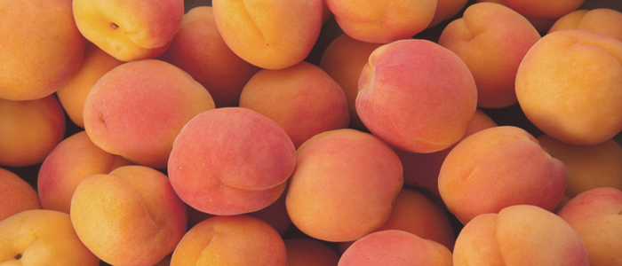 apricot_seed